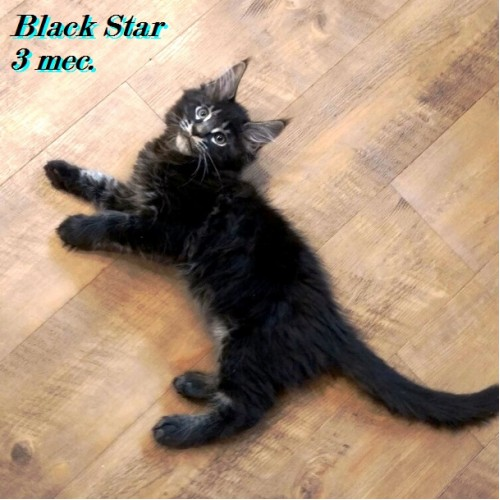 Go Black Star